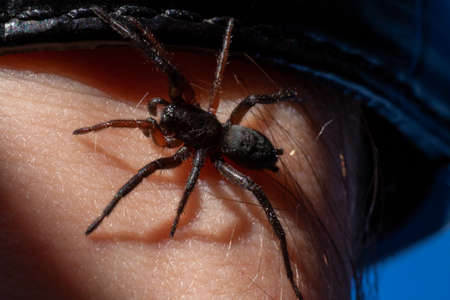 a small poisonous spider on the arm of a man bites the skin injects poison Banco de Imagens