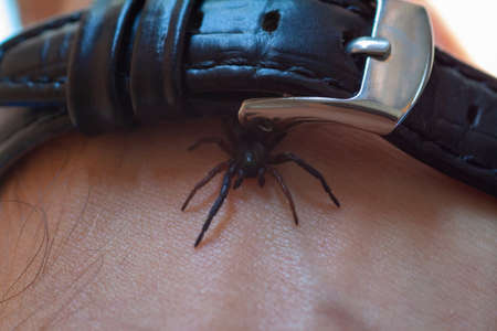a small poisonous spider on the arm of a man bites the skin injects poison Stok Fotoğraf