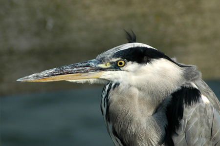 Portrait of a heron sitting on the edge of the pier photo