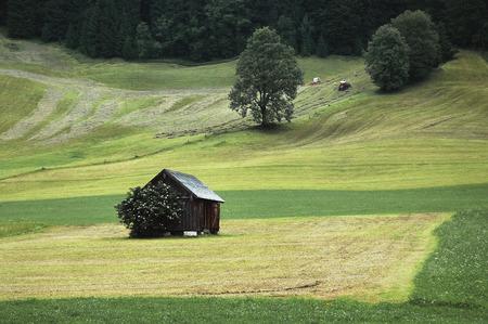 haymaking: Haymaking at the village of Gosau in Austria