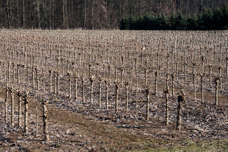 forestry: Forestry plant in Litovel Czech Republic Of These plantations Each year reaps from wicker Which it is produced for example baskets