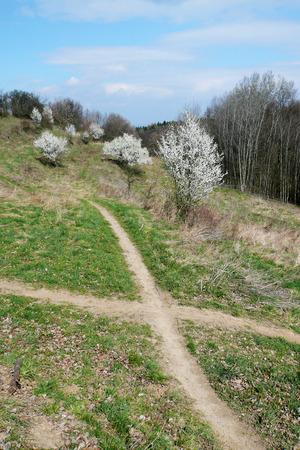 pathways: Crossroads Between pathways flowering shrubs in the English countryside