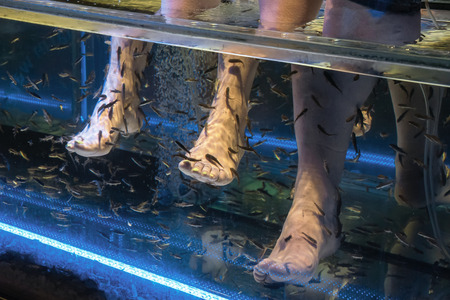 A fish spa Where hundreds of small fish eat away dead skin Stock Photo