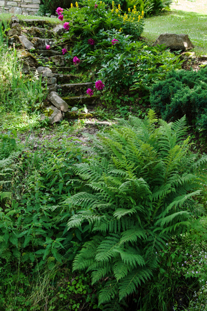 Fern and old stone staircase in the old garden