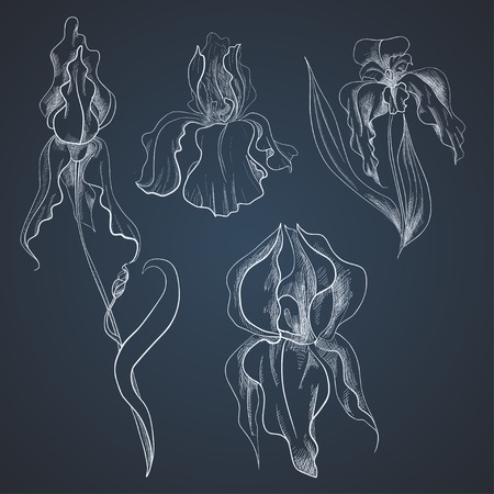 Set of hand-draw irises on graphic style Vector