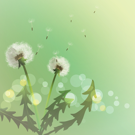 fondo primavera: Spring background with white dandelion. Vector illustration Vectores