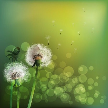 dandelion seed: Spring background with white dandelion. Vector illustration Illustration