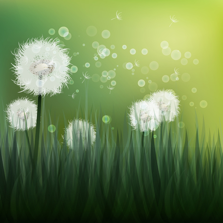 posterity: Spring background with white dandelions. Vector illustration
