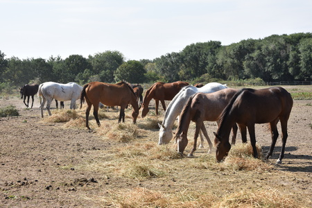 horse herd Stock Photo