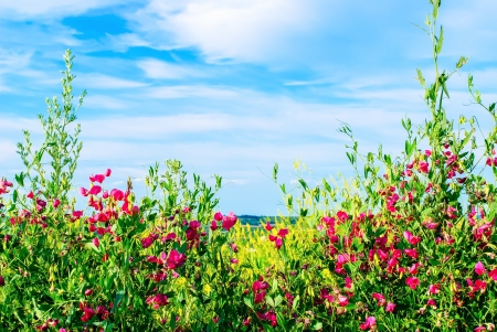 horizontal position: wildflowers on a background of blue sky in a horizontal position Stock Photo