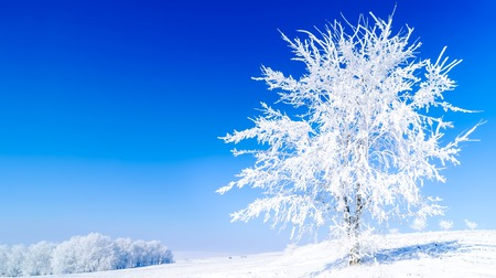 wintery day: cold frosty day with a tree in the foreground