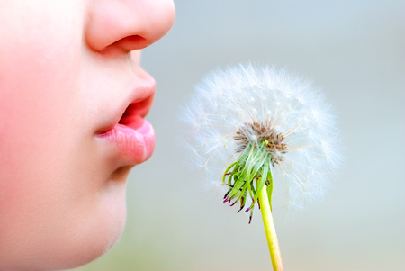 blowing dandelion: Young boy blowing dandelion in nature macro photography