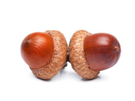 Oak acorns filmed on a white background.