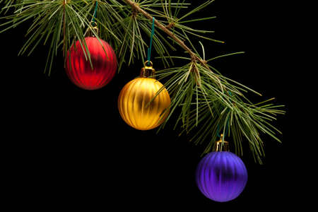 Red golden and purple matte bauble christmas ornaments on pine tree branch. Black background. Horizontal composition. Stock Photo