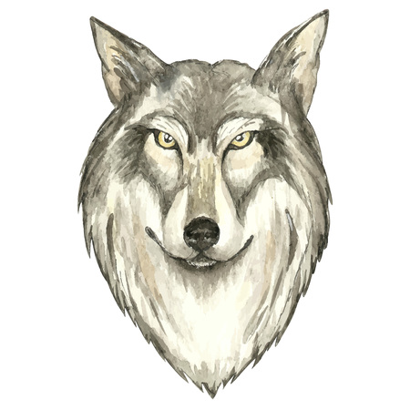 howl: Face of wolf.Watercolor vector  illustration on white background Illustration