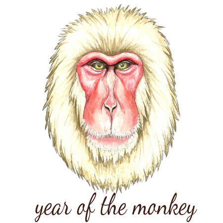 paiting: Face of Japanese monkey.Watercolor vector illustration on white background.Poster for New Year 2016
