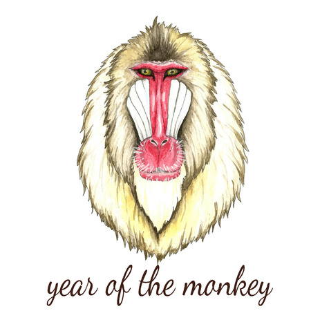 baboon: Face of baboon monkey.Watercolor vector illustration on white background.Poster for New Year 2016