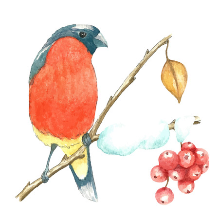 The bullfinch sits on the tree branch.Watercolor vector illustration on white background Illustration