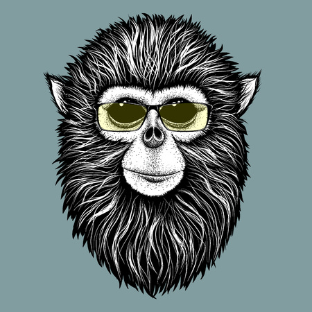 burmese: Hipster Burmese monkey  with yellow sunglasses.Vector illustration Illustration