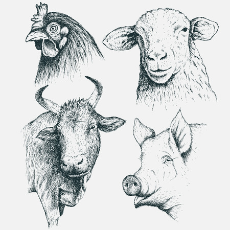 Set of  the heads  farm animals .Isolated on  white background.Vintage illustration.Hand drawn style