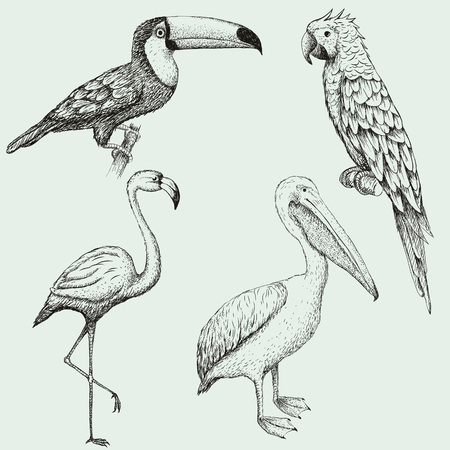 Collection of exotic tropical birds. Hand drawn vector illustration