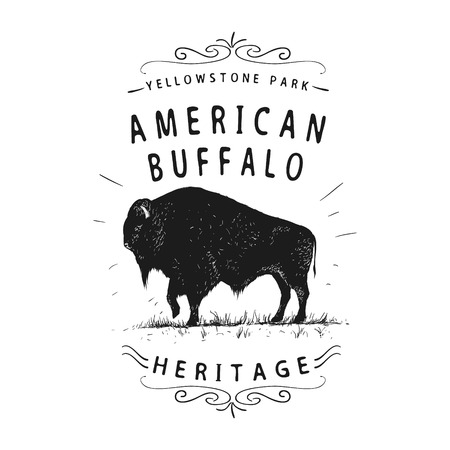 American buffalo. Vintage old label. Hand drawn vector illustration