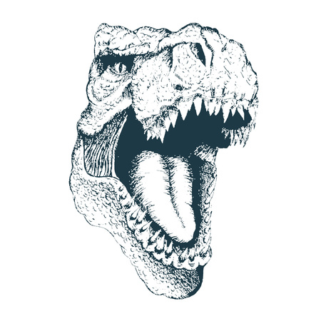 T-rex head. Detailed hand drawn style. Isolated on white background