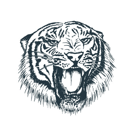 Tiger portrait. Detailed hand drawn style. Isolated on white background