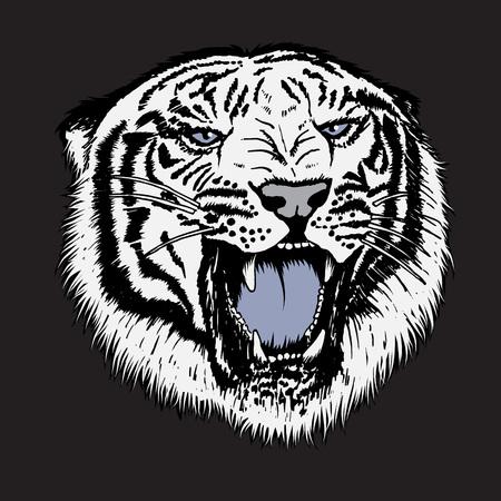 Head of white tiger.Isolated on black background.Vector illustration Illustration