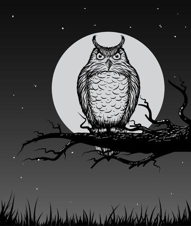 artoon: Owl is sitting on the branch in the night.Vector illustration Illustration