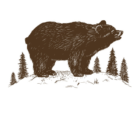 bear grizzly in the forest.Hand drawn vector illustration isolated on white background