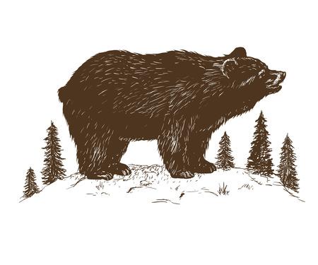 oso grizzly en el bosque. Ilustración de vector dibujado a mano aislado sobre fondo blanco