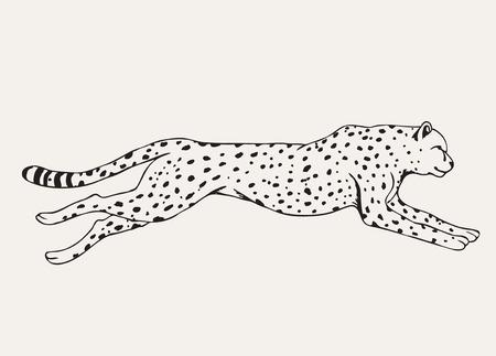 Luipaard uitvoeren. Beweging van roofdier. Hand getrokken vector dier Stock Illustratie