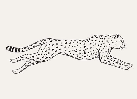 Runing leopard.Motion of predator.Hand drawn vector animal
