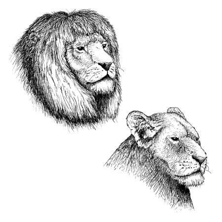Hoofd van leeuw en leeuwin Stock Illustratie