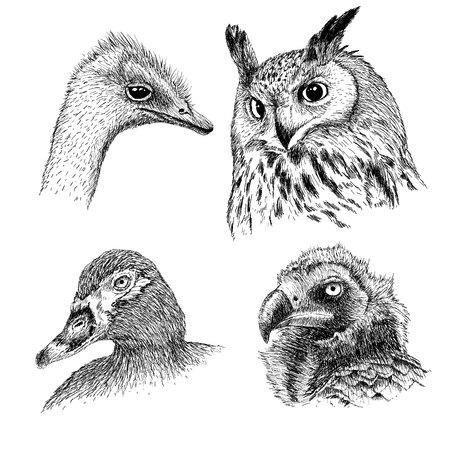 griffon: Realistic heads of wild birds