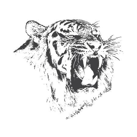 El tigre enojado está gruñendo