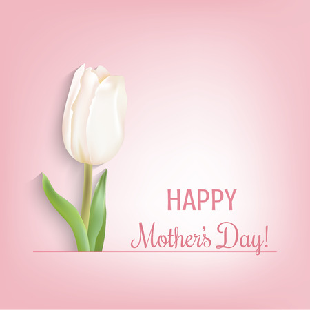 white tulip: White tulip and congratulations text. Light pink background.