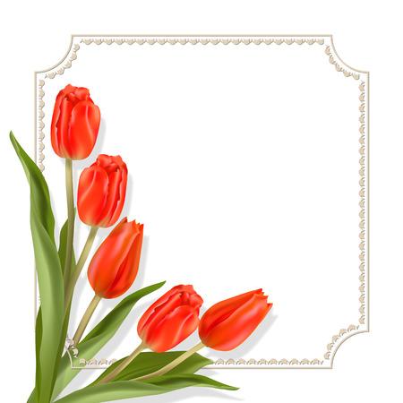 Rode tulpen. Frame voor tekst. Witte achtergrond. De template voor de felicitaties voor de verschillende groeten.
