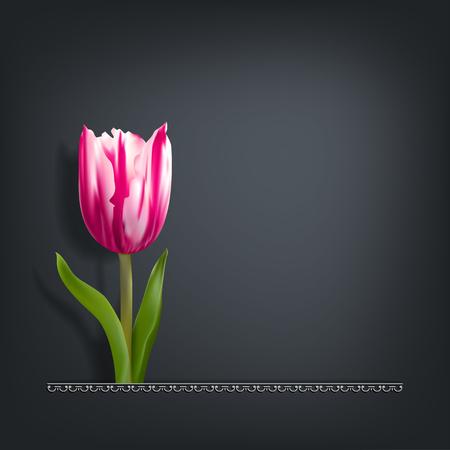 Crimson tulip on a dark background with shadow Ilustração