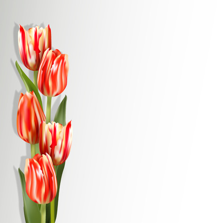 motley: Red tulips on a light background with shadow. Motley red flowers on the left side of card. The template for the congratulations for the various greetings.