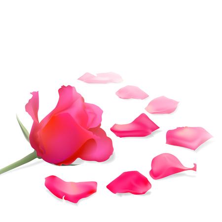 Elegant holiday background with rose petals on a light background Illustration