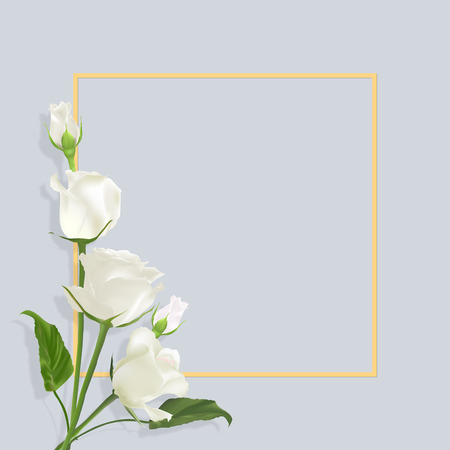 Realistic vector white roses on light grey background with border. Greeting card with place for greeting text for any holiday. Mothers day card.