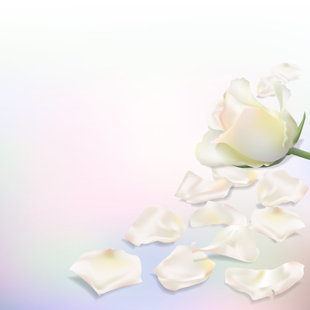 fallen: Realistic vector roses on a light background. White flower and petals. Ready template for greeting cards. Card with place for congratulation for any kind of celebration.Elegant holiday background with rose petals on a light background. Illustration