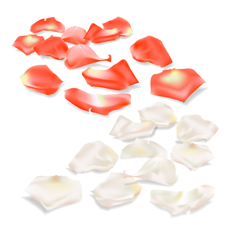 fallen: Elegant red and white rose petals on a light background for your design. Isolated vector objects