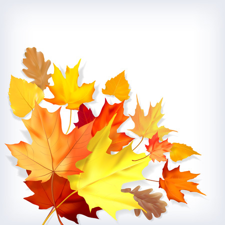 naturalistic: Isolated colorful autumn leaves on a white background. Vector illustration. Maple, birch, oak naturalistic leaves.