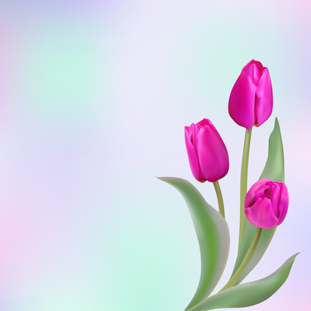 Bouquet of three magenta tulips with delicate green leaves on a light colored background. Vector illustration with place for text. Photo realistic delicate flower. Illustration