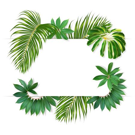 Groene zomer tropische achtergrond met exotische palmbladeren en planten. Witte banner voor u tekst en fotorealistische regenwoudbladeren.