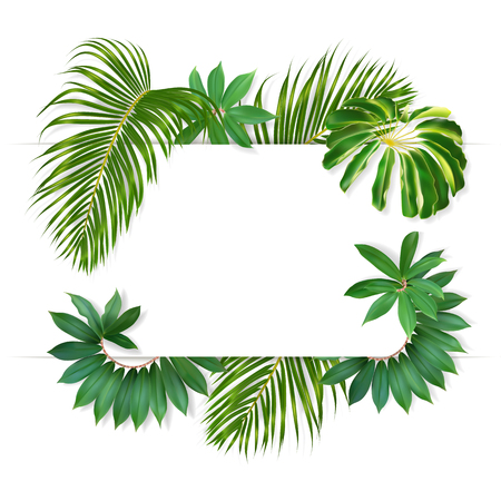 Green summer tropical background with exotic palm leaves and plants. White banner for you text and photorealistic rainforest leaves.