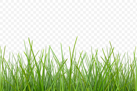 Green grass meadow border vector pattern. Spring or summer plant lawn. Photo realistic grass on a transparent background. Illustration